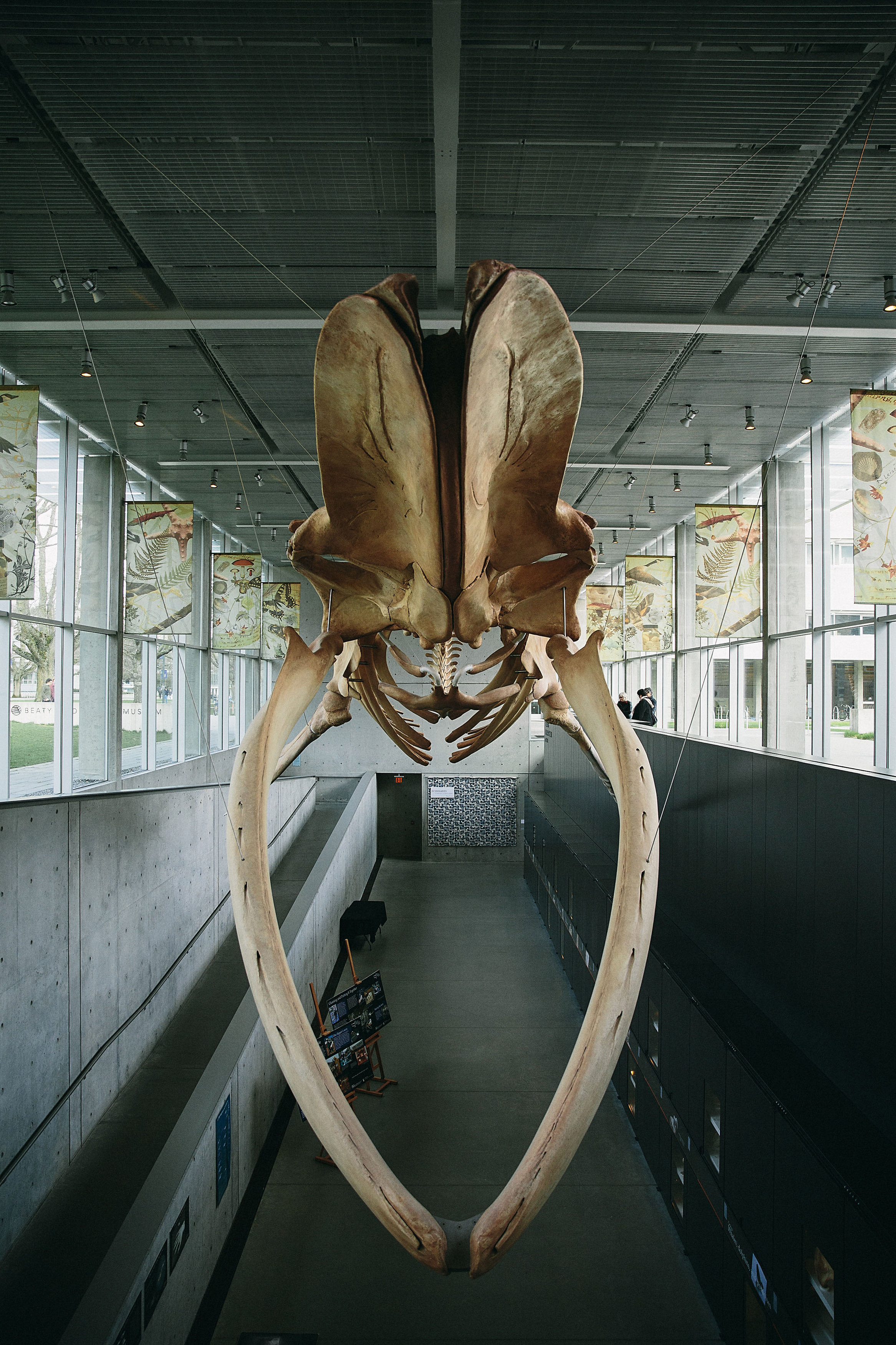 whale skeleton in beaty