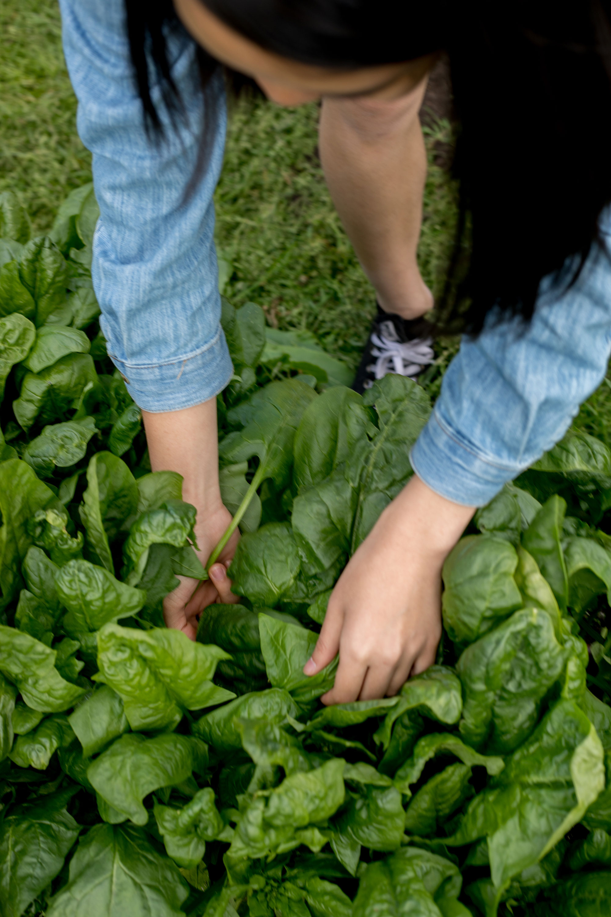 student picking vegetables