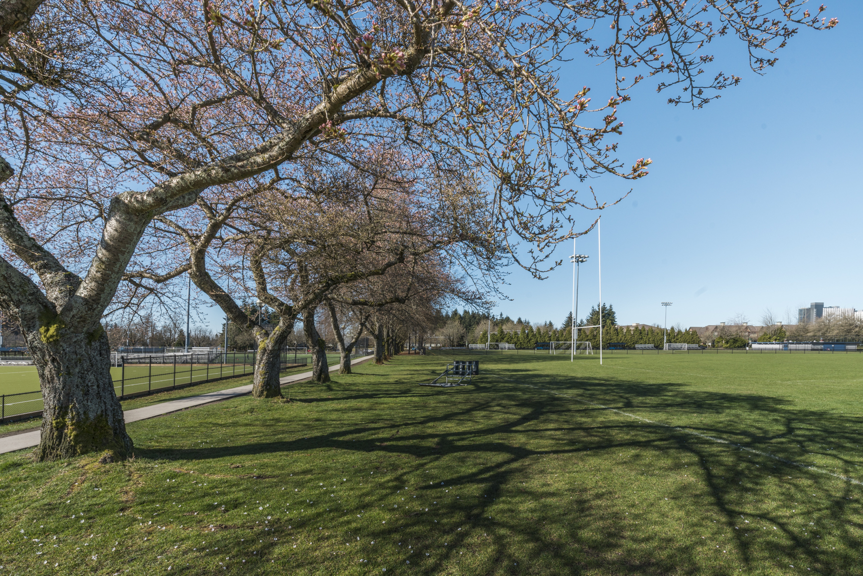 Trees surrounding a sports field at UBC Vancouver.
