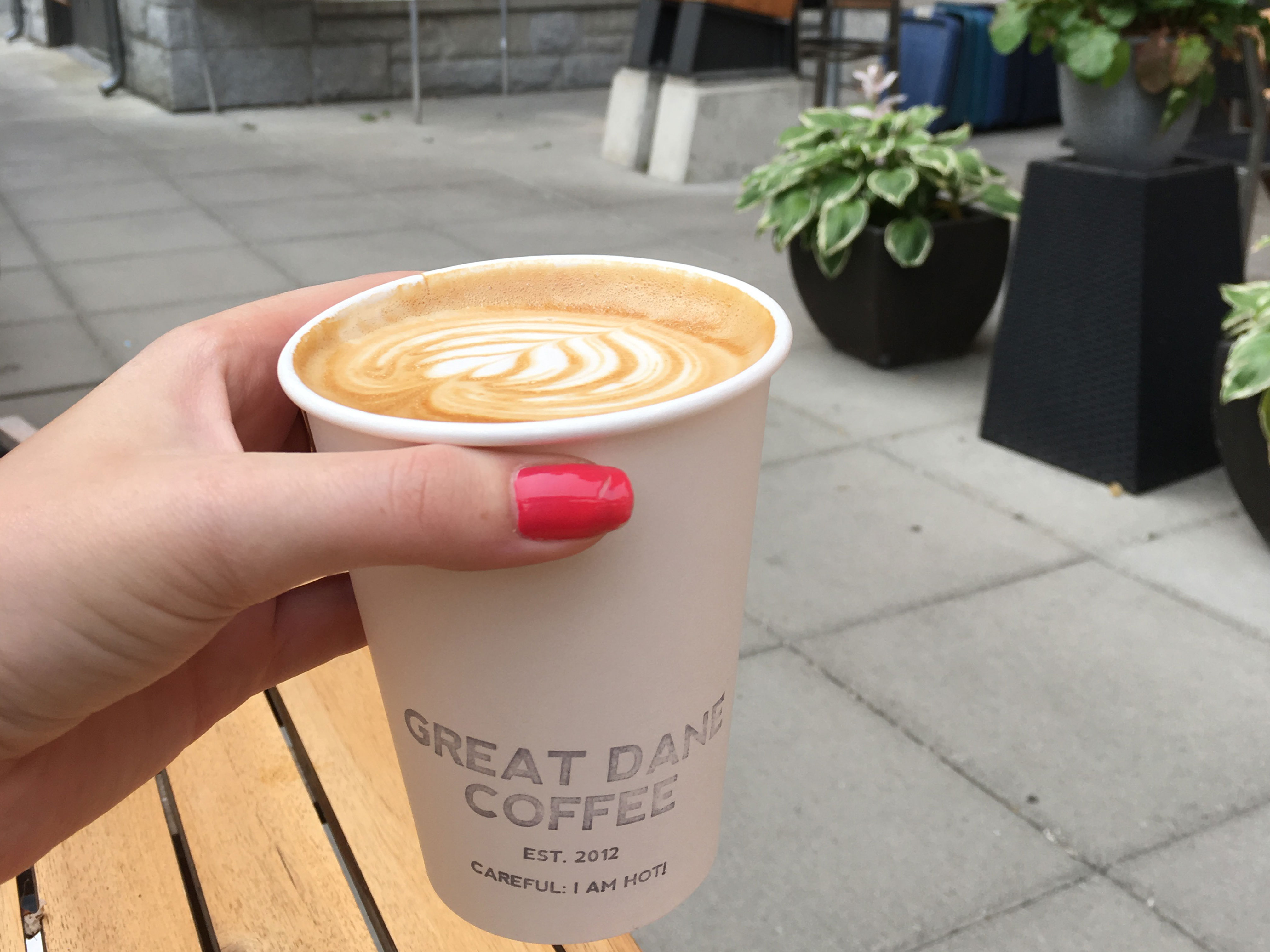 latte from great dane