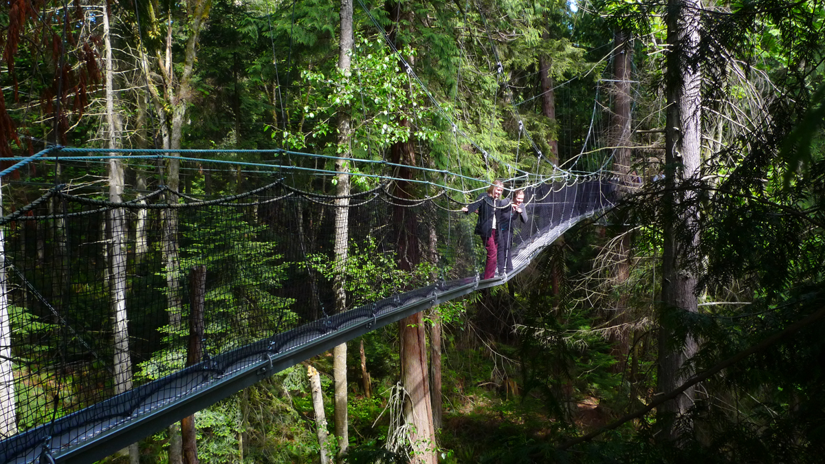 tree top walk in the forest