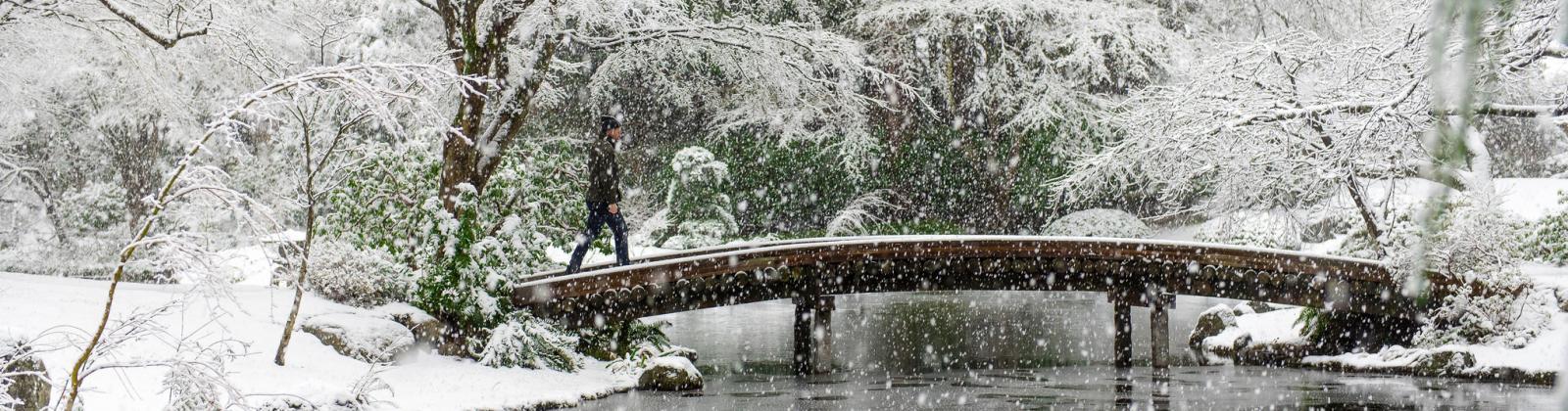 Nitobe Memorial Garden on a snowy day