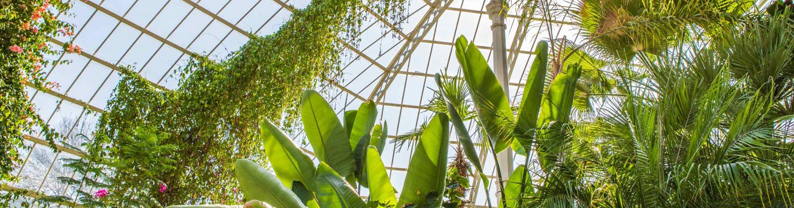 Leafy green plants in a glass conservatory.