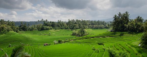 Indonesian farm