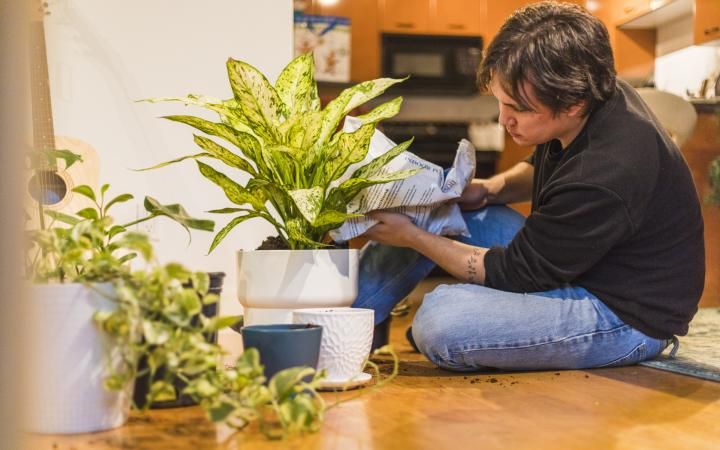 Student repotting plants at home