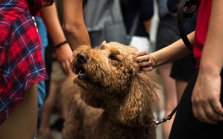 A dog at Imagine UBC