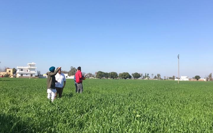 three people flying kites in a field in Amritsar, India