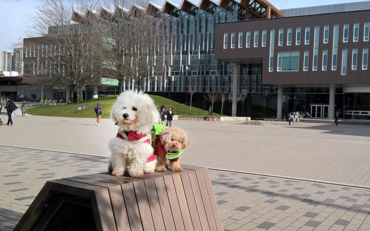 teddy and cotton in front of the nest