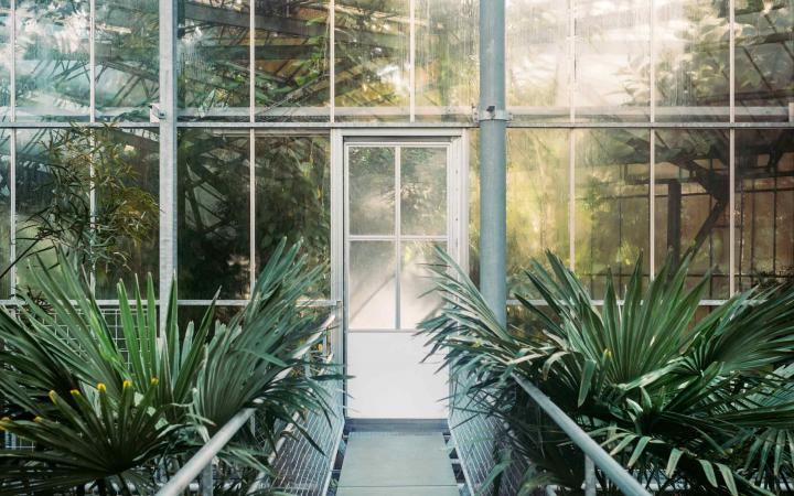 A photograph of a conservatory that includes a door surrounded by plants.